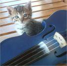 Violon bleu et le chat