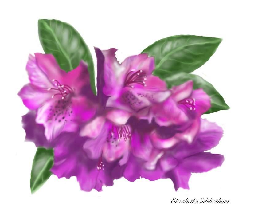 Sidebotham, Elizabeth: SUMMER FLOWERS