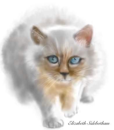 Sidebotham, Elizabeth: Oh Puss 2!