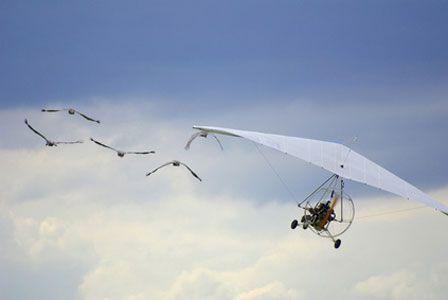 GUINET, SYLVAIN: L'oiseau mécanique